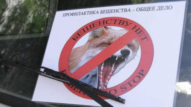 Бешенство выявили упавшей дворовой собаки вРостовской области