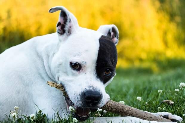 В Севастополе мужчина украл собаку для подарка другу
