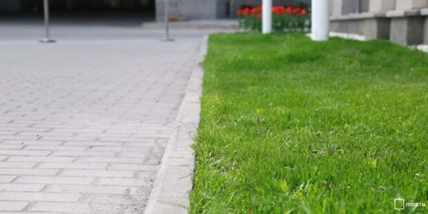 Высадка кустарников во дворе на Волгоградском запланирована на следующий год — Жилищник