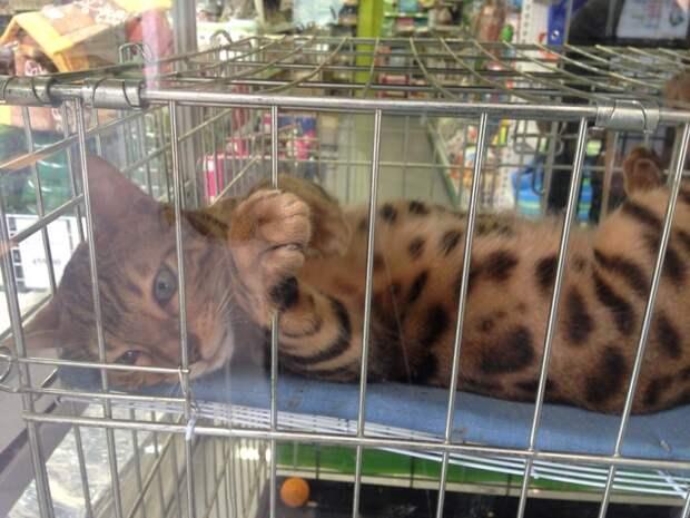 Использование клетки в коррекции поведения кошек