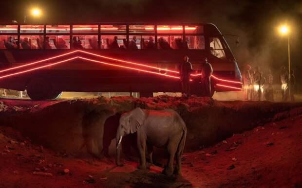 8 сильных фото африканских животных, которых почти истребил человек