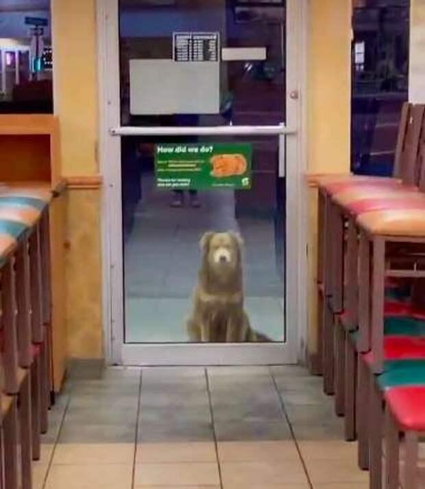 собака у дверей