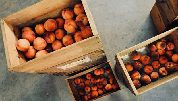 Зараженные личинками персики привезли в Петрозаводск