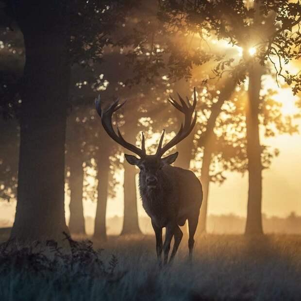 Сказочные олени: 10 удивительных фотографий
