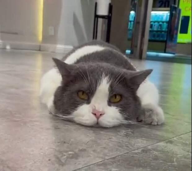 Подите прочь, никчемные двуногие: котик почивать изволит