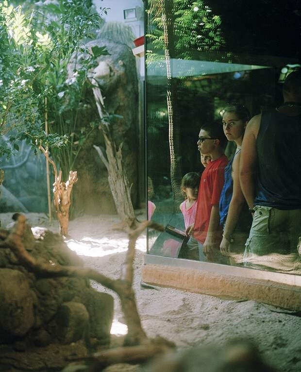 Ужасы зоопарков со всего мира