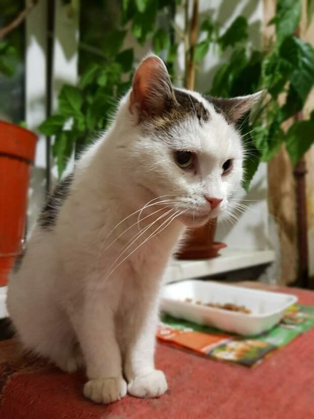Этот пост - последняя возможность спасти домашних котов от усыпления!!! Неравнодушные, откликнитесь, умоляем!