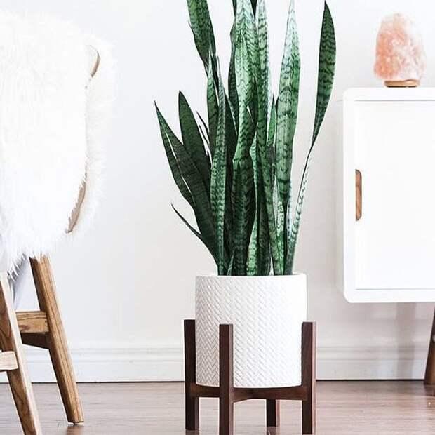 Оригинальные подставки под растения, которые украсят любой интерьер