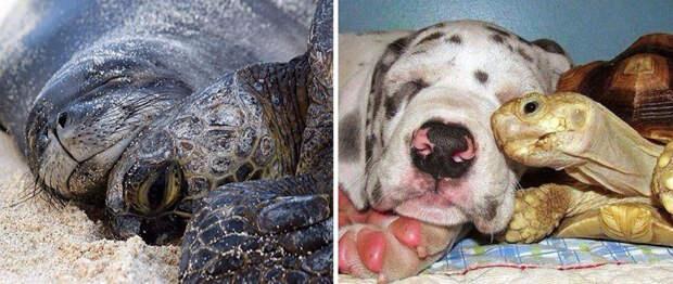 36.  животные, собака, сходство, тюлень