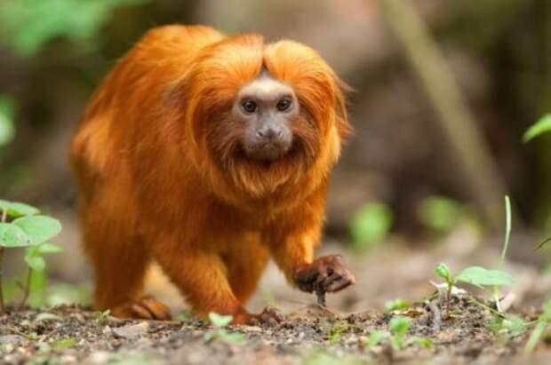 Топ-10: виды животных, которые люди спасли от вымирания