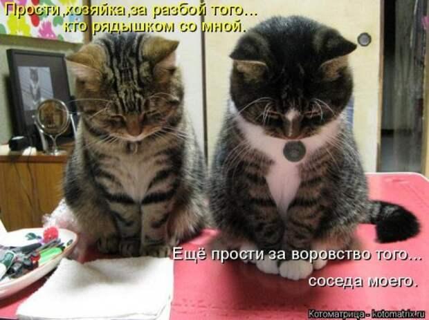 Свежая котоматрица для всех (33 фото)