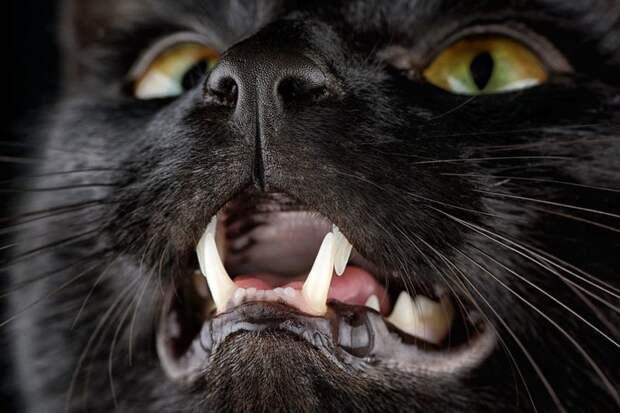 11. домашние животные, животные, коты, кошки, морда, нос, носики, фото кошек