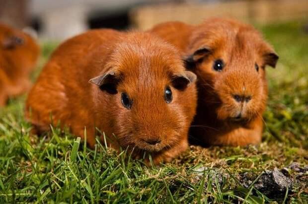 20 фактов о животных, которые заставят вас улыбнуться, даже если у вас был плохой день