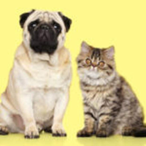 15 неожиданных фактов, которые откроют мир животных с новой стороны
