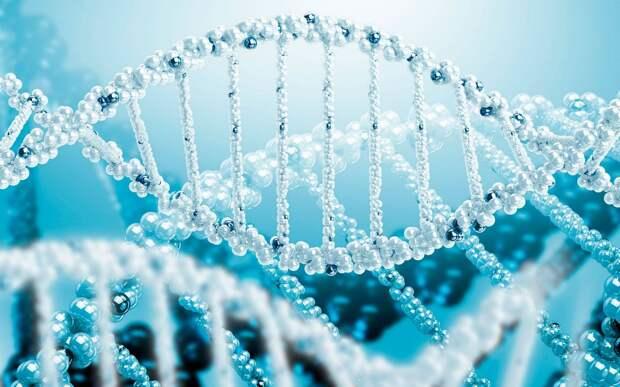 Предложен проект создания человеческого генома с нуля