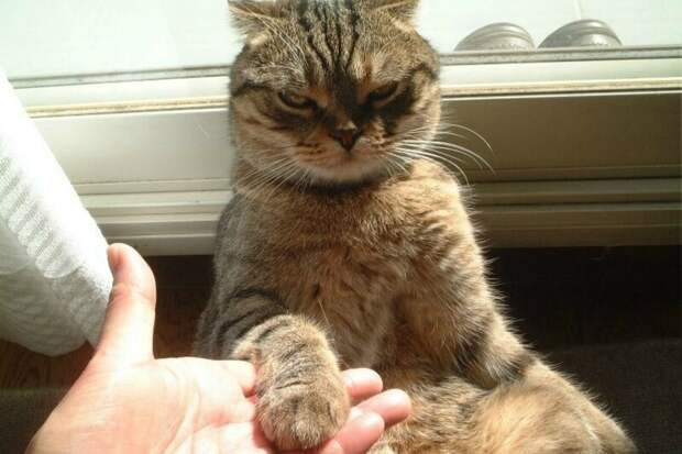 """11. """"Если наш кот нежно положил лапу кому-либо на ногу, его срочно нужно взять на руки и погладить. Если этого не происходит, большой палец ноги разрешается укусить,"""" - Cheybean животные, забавно, забавные животные, истории, питомцы, подборка, собаки, хозяева"""