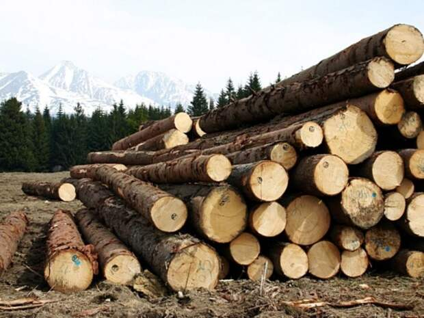 В России возникла значительная нехватка древесины для строительства домов