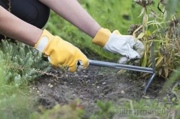 Как подготовить любимый сад и огород к зимним холодам