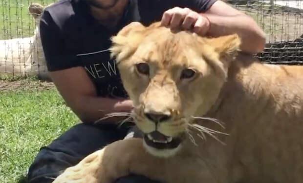 Лев не видел друга четыре года