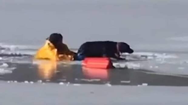 На озере послышались крики человека и вой пса, а через миг прохожий увидел барахтанье в ледяной воде