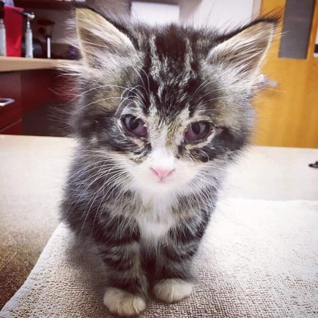 Женщина приютила маленького, больного котенка, не зная о том, что он станет ее ангелом-хранителем!