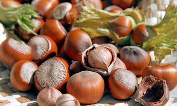 Лесной орех вместо всех лекарств