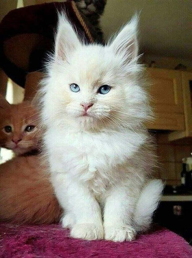 Кошачья жизнь #cat #cats | Мейн кун, Милые котики, Милые детеныши ...