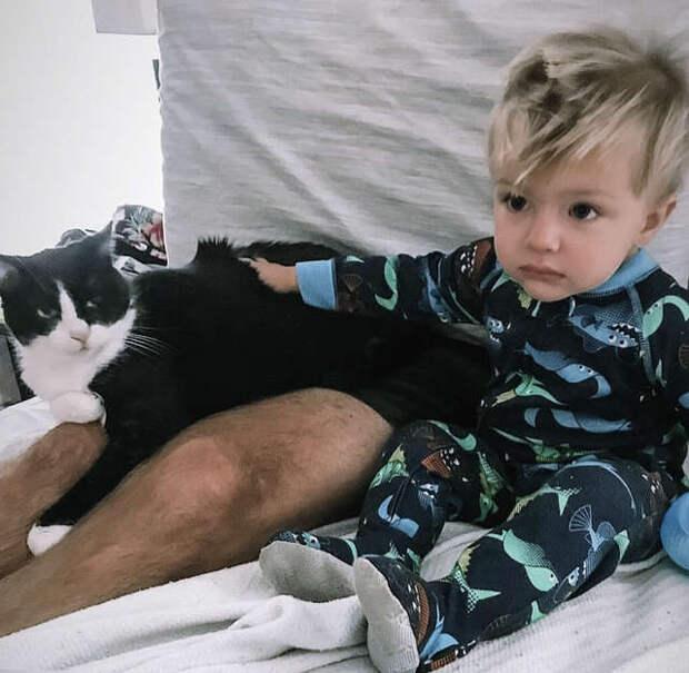 кошка с мальчиком