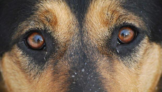 Карельские спасатели вытащили собаку из очистных сооружений
