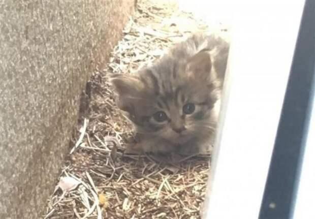 Котенок прятался от людей и звал маму-кошку, надеясь, что она вернется
