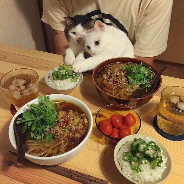 Моя очередь дегустировать! Нет уж, моя! дегустация, еда, животные, кот, коты, позитив, реакция, юмор
