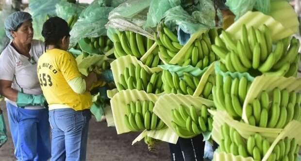 Военная техника в обмен на бананы, или Как в СССР появились экзотические плоды