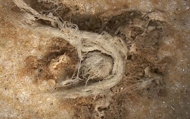 Веревка возрастом 50 тыс. лет поколебала теорию о когнитивных способностях неандертальцев