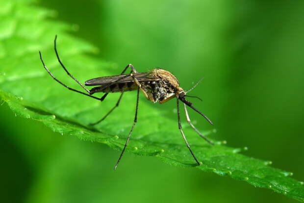 2. Спорт комар, укус
