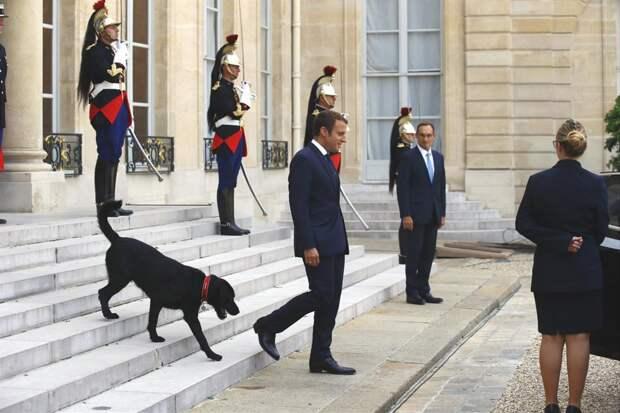 Собака Макрона выступила с новогодним посланием к людям. Оно про доброту и ответственность