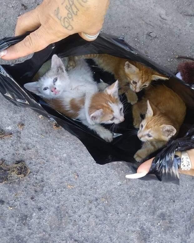 Котята в пакете