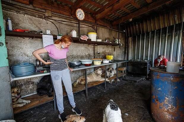Псковские зоозащитники: «Стройка нового приюта тянет силы и финансы»