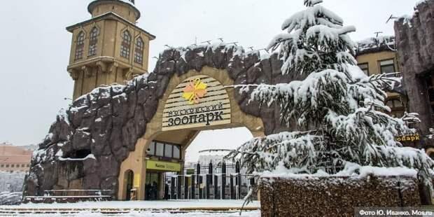 Скончался президент Московского зоопарка Владимир Спицин
