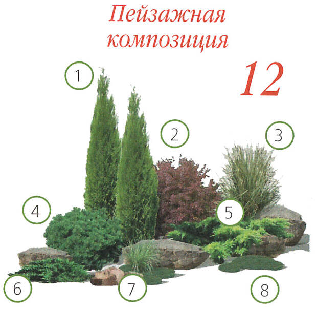 12 варианов хвойной клумбы