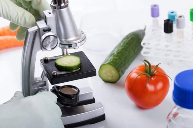 лабораторный анализ томатов и огурцов на содержание нитратов