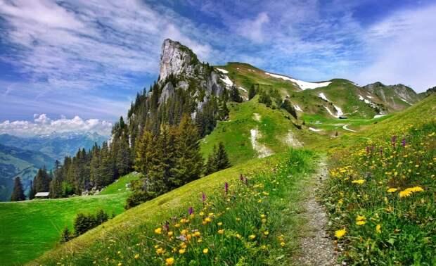 Фотограф: E.Wymann. Луга Швейцарии.