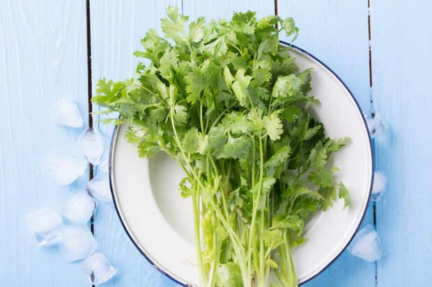 Петрушка, кинза, укроп, зеленый лук — это вкусно, полезно и сочно