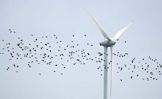 Китай пускает деньги на ветер и не тратит их зря