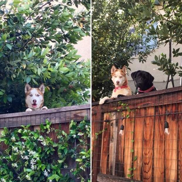 Любопытные соседи