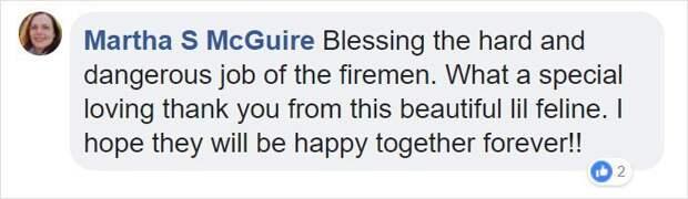 Пожарный в Калифорнии спас кота от лесного пожара, теперь тот не отходит от него ни на шаг друзья на век, калифорния, коты, пожары, спасение