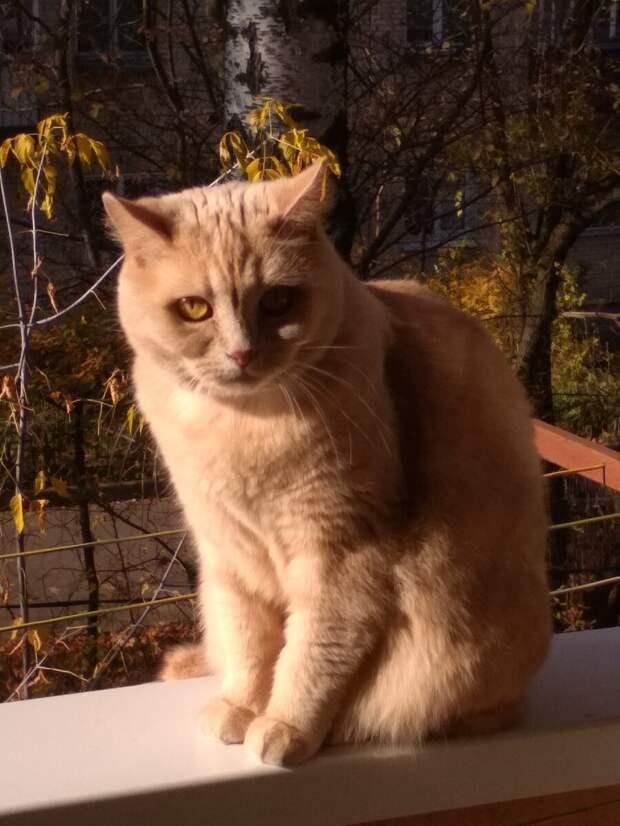 Как подружить взрослых кошек: мой опыт решения проблемы (взяла кошку из приюта, хотела как лучше, а получилось…)