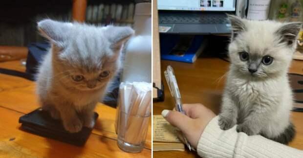Слишком маленькие и невероятно милые: 13 фото котят