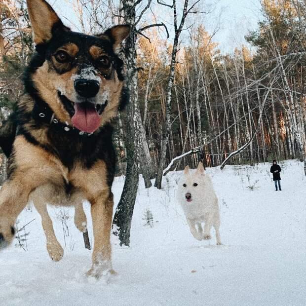 Замёрзшая собака бродила по зимнему парку, рассматривая прохожих. Навстречу ей шли 2 человека…