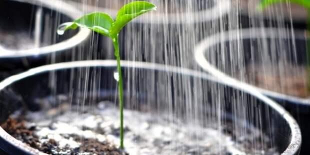 лучшая вода для полива растений