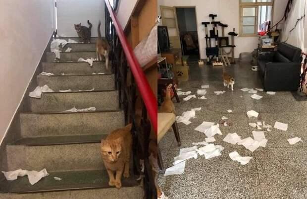 коты, кошачьи выходки, хулиганство, кошки